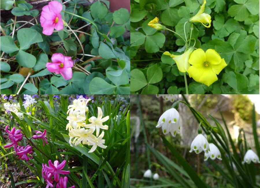 庭の花 春その2_f0059673_10302931.jpg