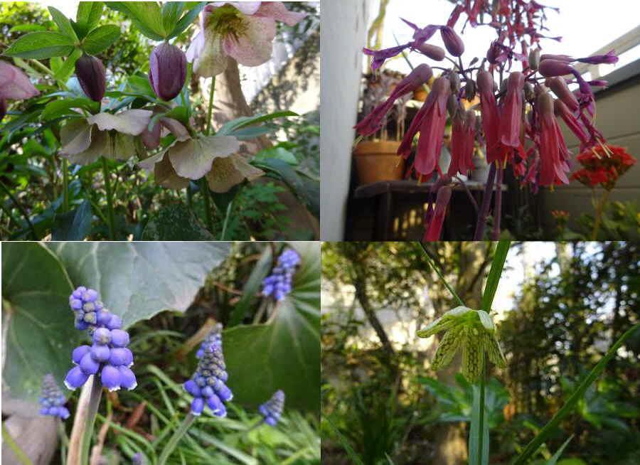 庭の花 春その2_f0059673_10350211.jpg