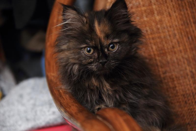 子猫を探しています!_f0075075_07500768.jpg