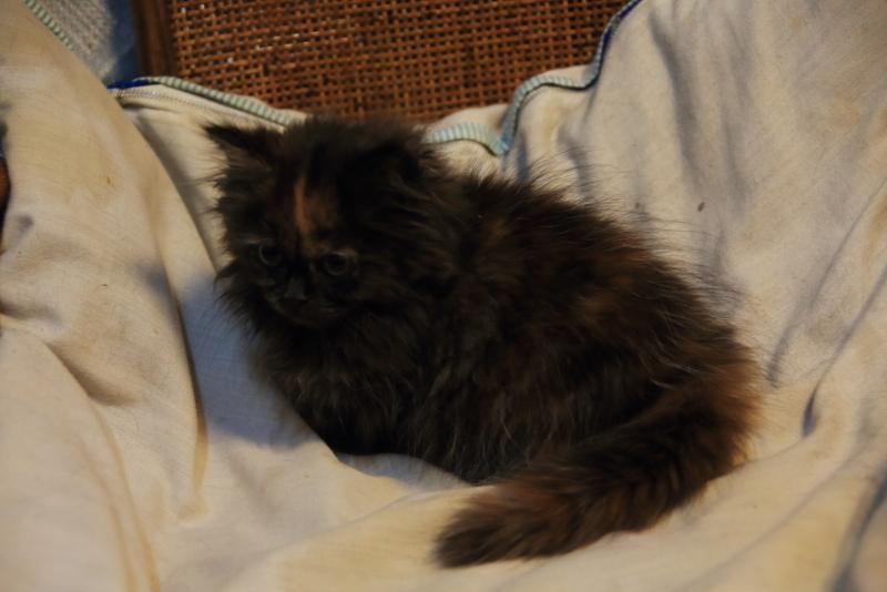 子猫を探しています!_f0075075_07595077.jpg