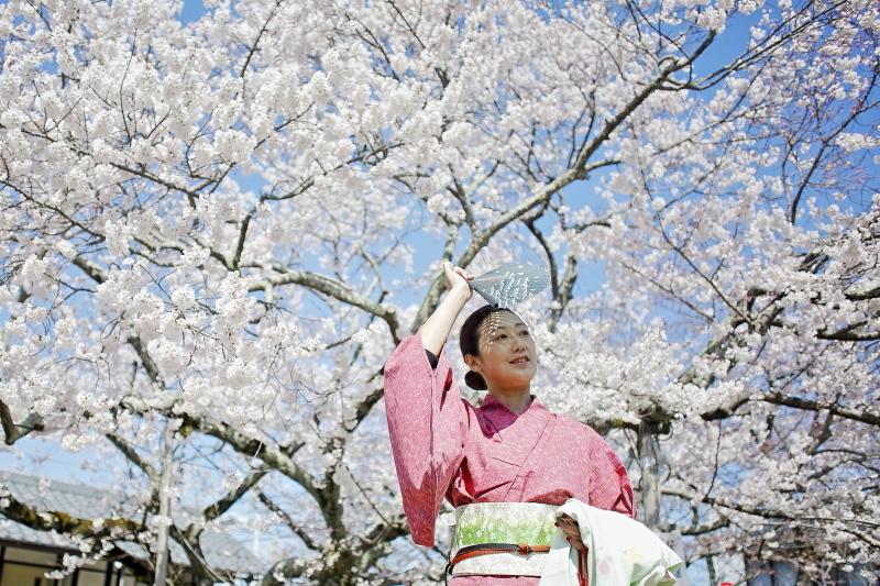 嘉明桜とくノ一_c0196076_08044298.jpg