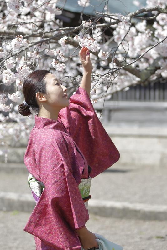 嘉明桜とくノ一_c0196076_08100927.jpg