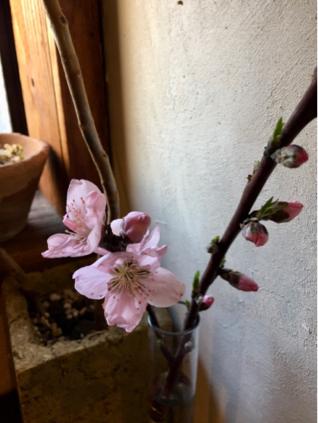 桜_e0025376_08572427.jpg