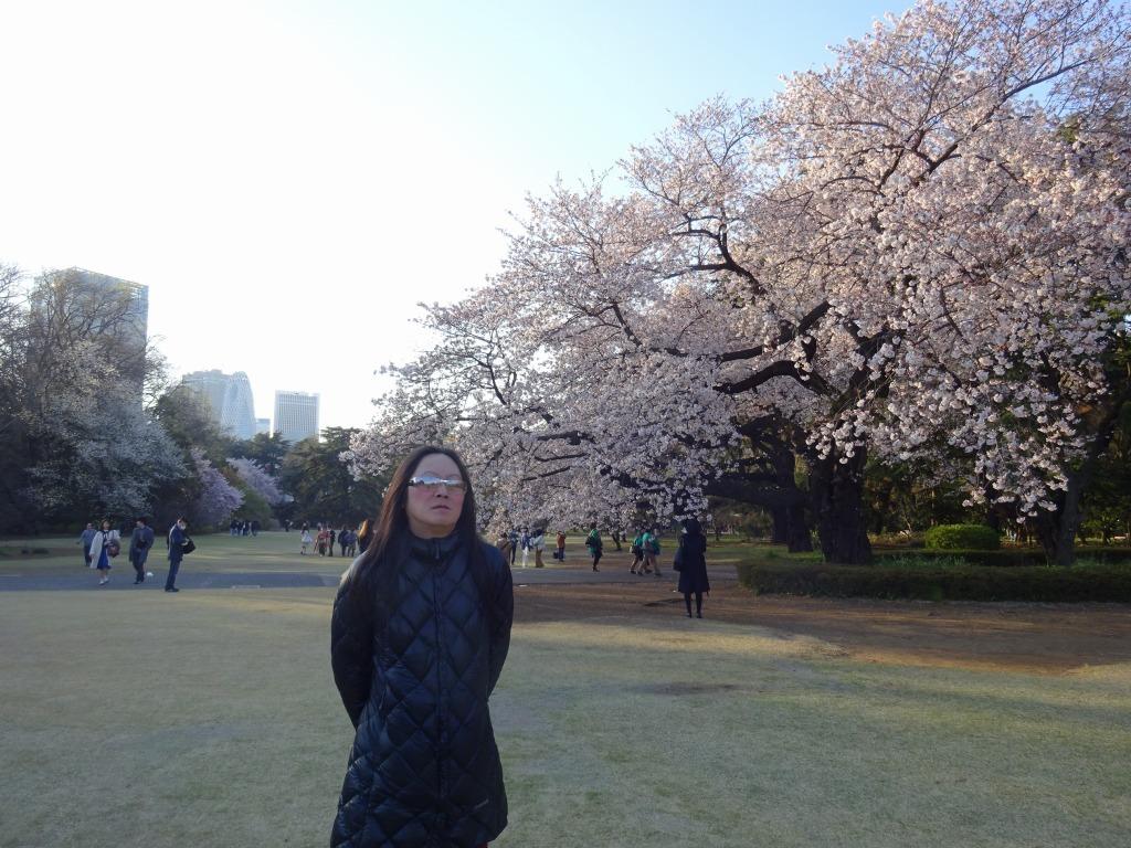 新宿御苑の色んな種類の桜_d0061678_08330449.jpg