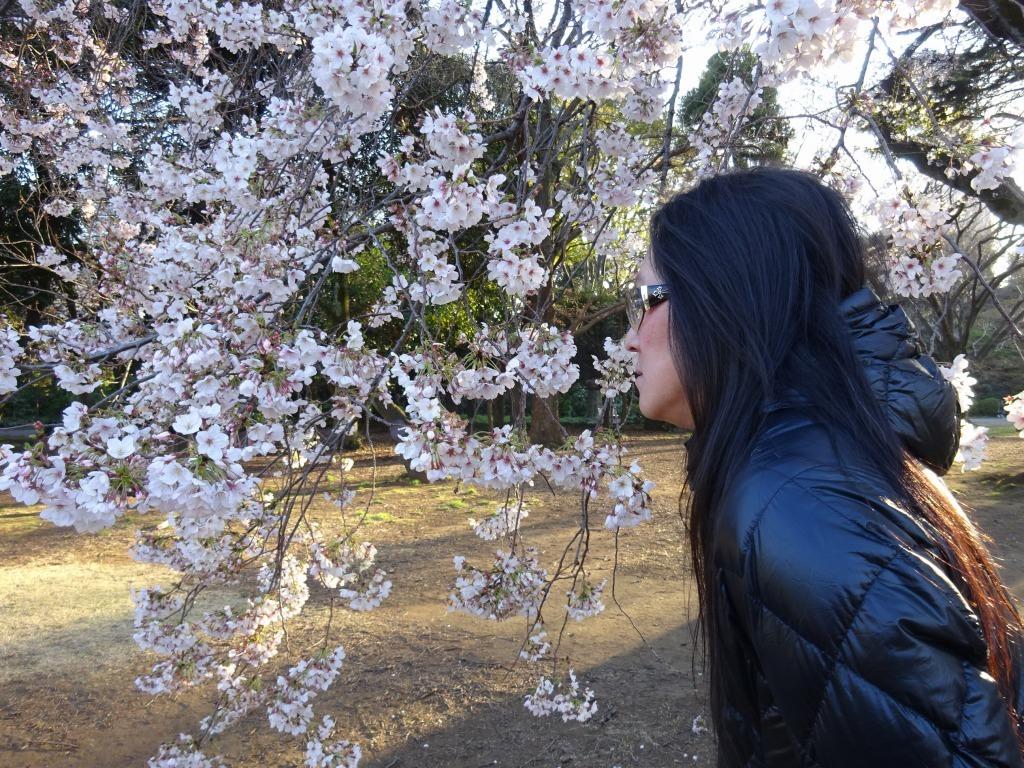 新宿御苑の色んな種類の桜_d0061678_08333030.jpg