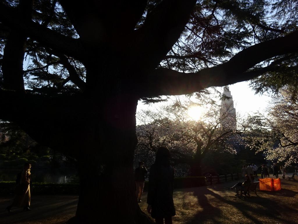 新宿御苑の色んな種類の桜_d0061678_08342627.jpg