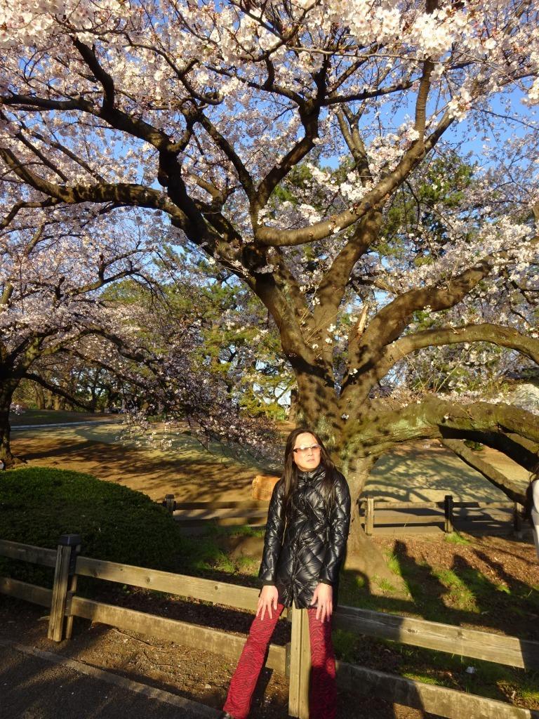 新宿御苑の色んな種類の桜_d0061678_08352006.jpg