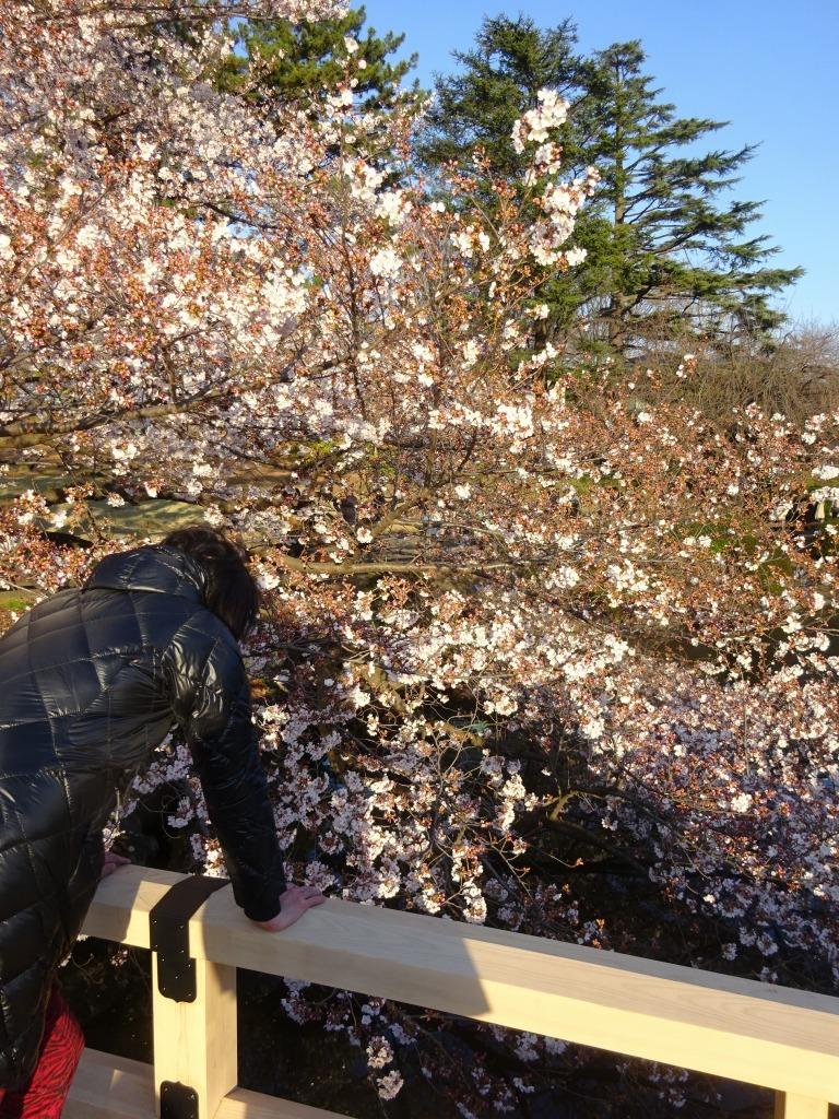 新宿御苑の色んな種類の桜_d0061678_08355716.jpg