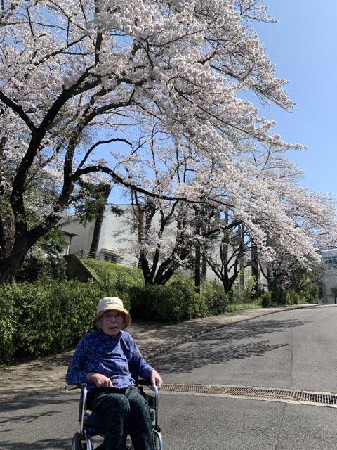 桜散歩_e0133780_21302368.jpg