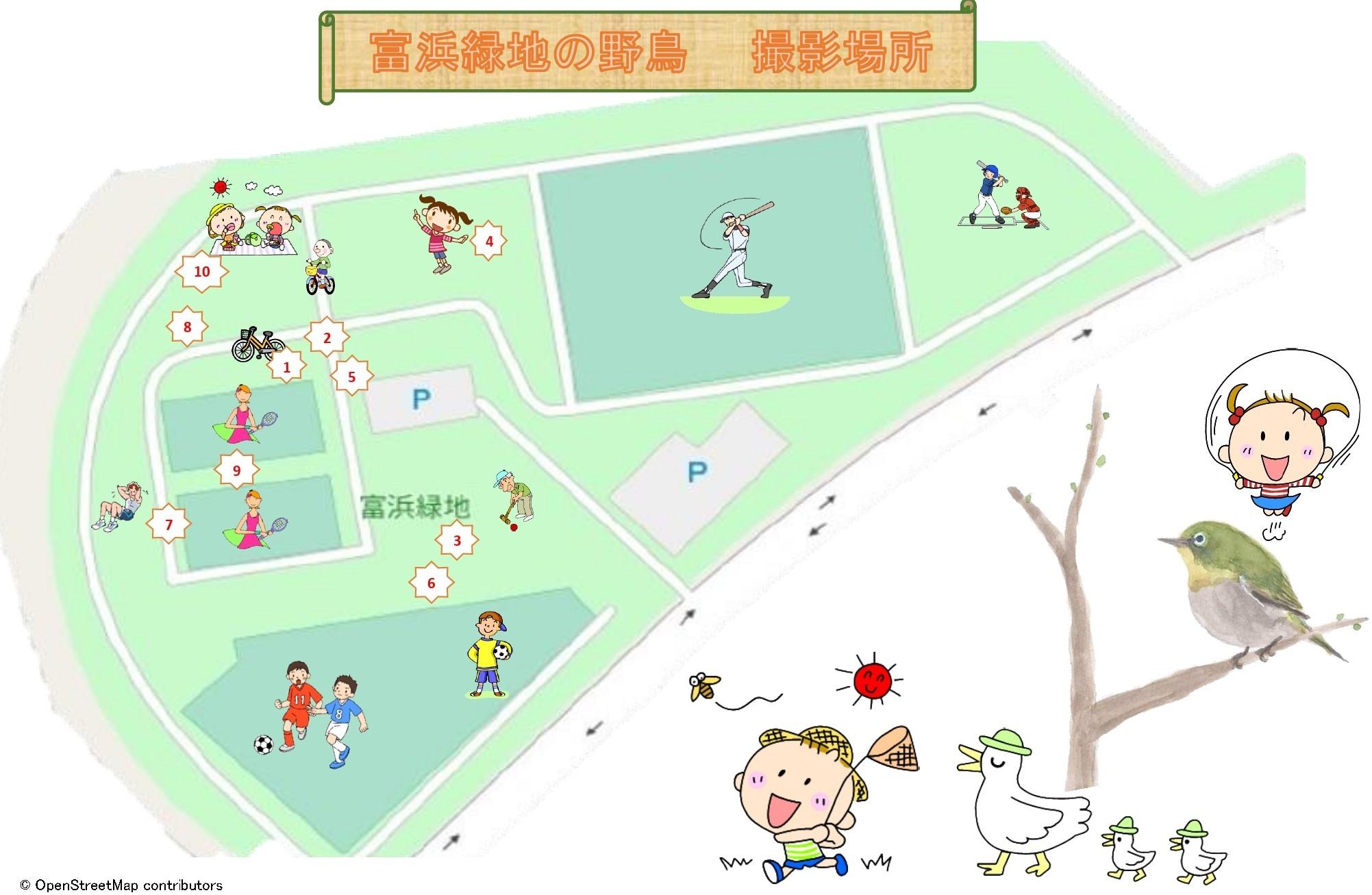 富浜緑地で見られる野鳥についてR2.3.17_d0338682_11342159.jpg