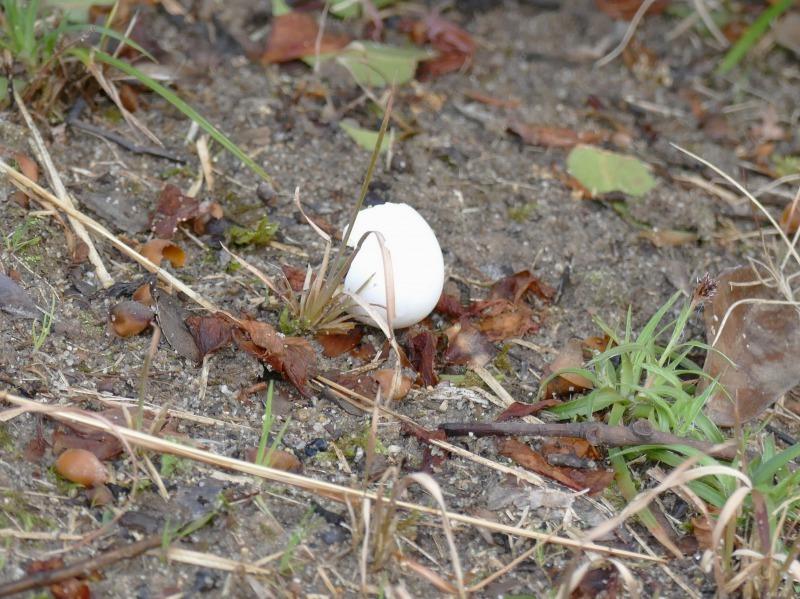富浜緑地で見られる野鳥についてR2.3.17_d0338682_12473731.jpg