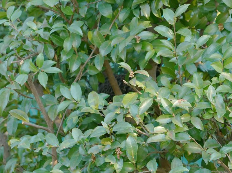 富浜緑地で見られる野鳥についてR2.3.17_d0338682_12524835.jpg