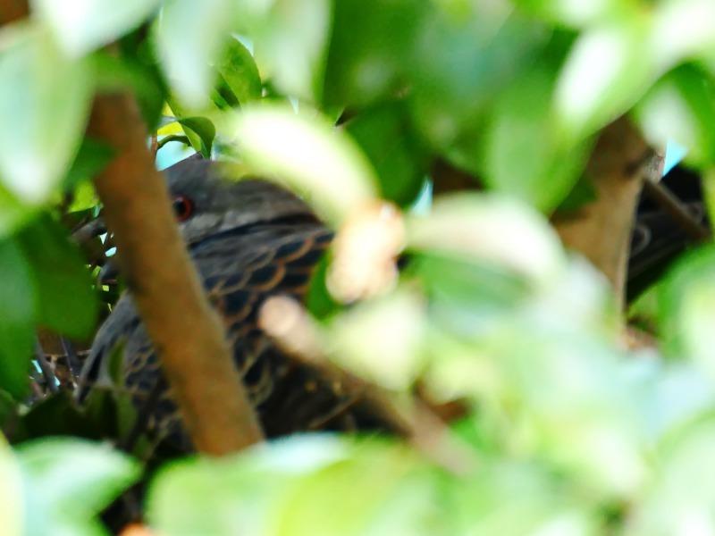 富浜緑地で見られる野鳥についてR2.3.17_d0338682_12525771.jpg