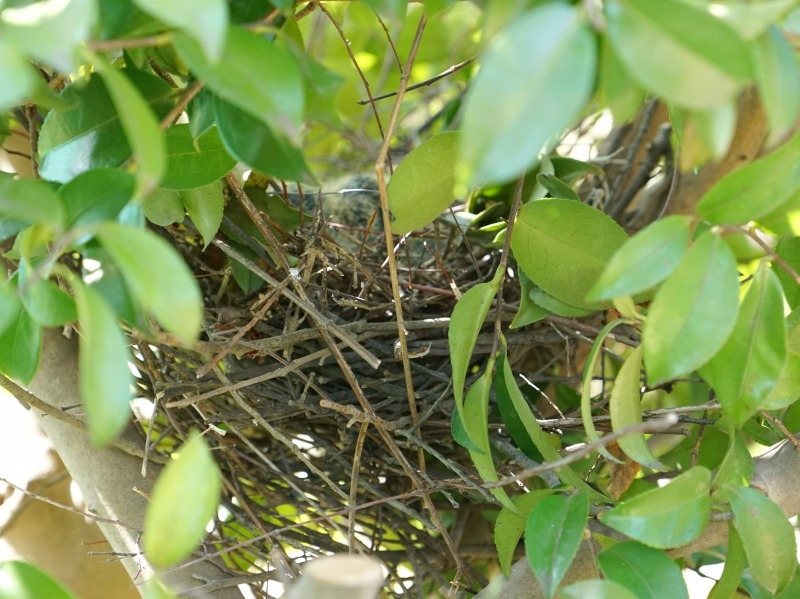 富浜緑地で見られる野鳥についてR2.3.17_d0338682_12530594.jpg