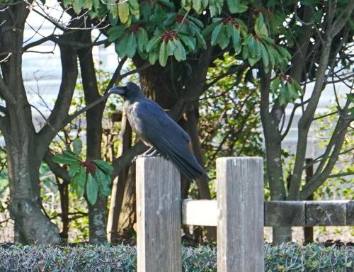 富浜緑地で見られる野鳥についてR2.3.17_d0338682_13304633.jpg