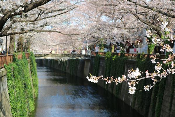 中目黒-目黒川-桜_d0118589_10350667.jpg