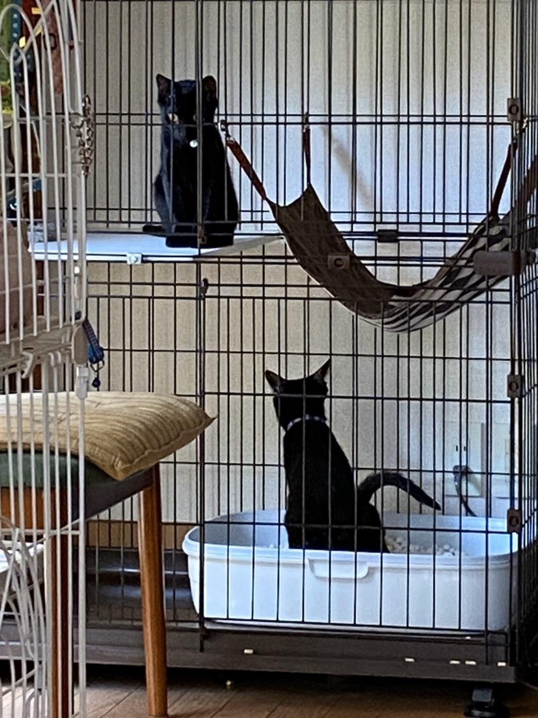 【里親決定の猫】ウールとシルク_a0170297_20275783.jpeg
