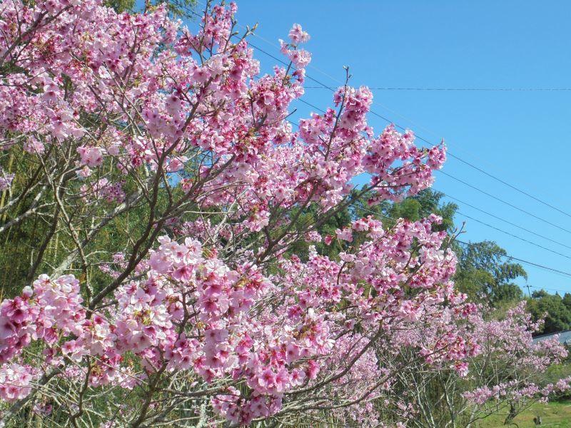 ようやく 春🌸_a0208899_13215981.jpg