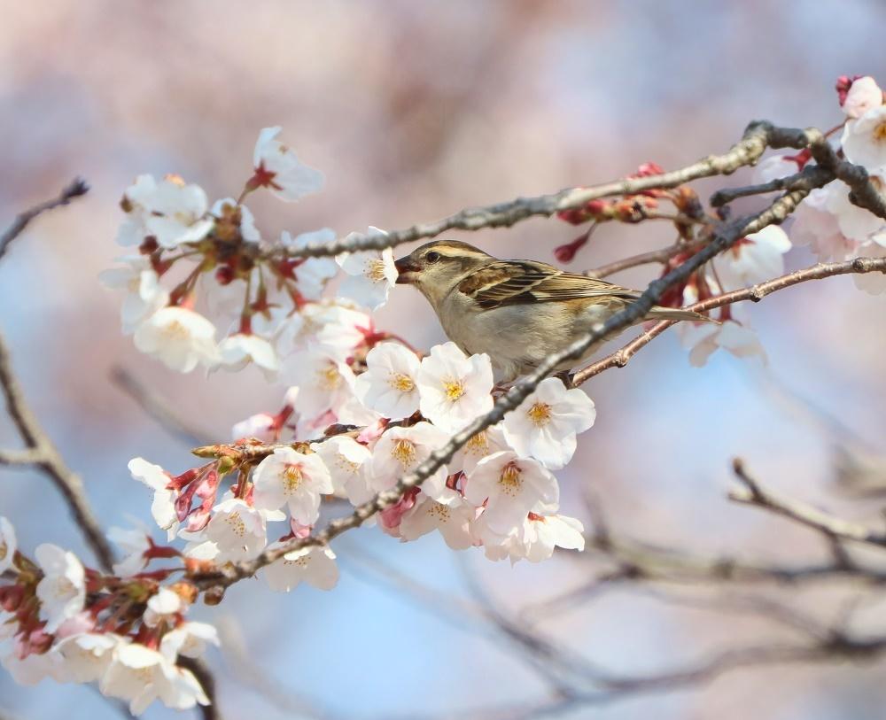 花びら廻したよ、、_f0305401_15573494.jpg