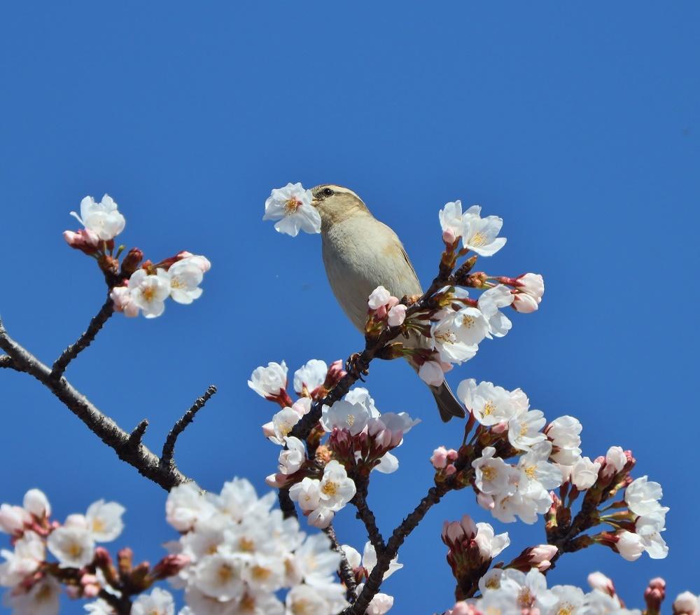 花びら廻したよ、、_f0305401_15574036.jpg