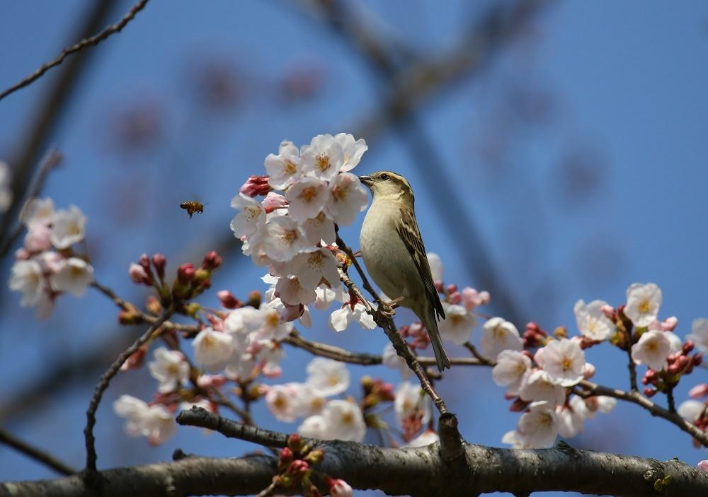 花びら廻したよ、、_f0305401_15574600.jpg