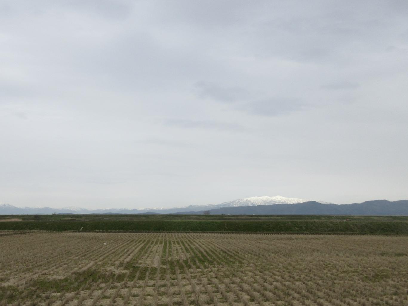 遠くの雪山・川縁の柳_a0203003_21060972.jpg