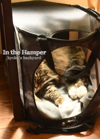 猫がハンパーに籠もるシーズンが到来_b0253205_09560144.jpg