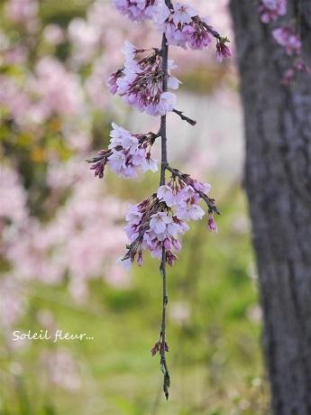 花は、咲く_c0098807_16415513.jpg