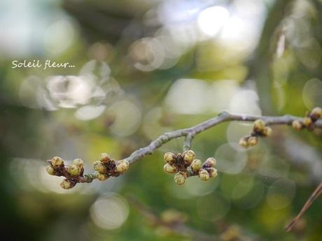花は、咲く_c0098807_16432718.jpg