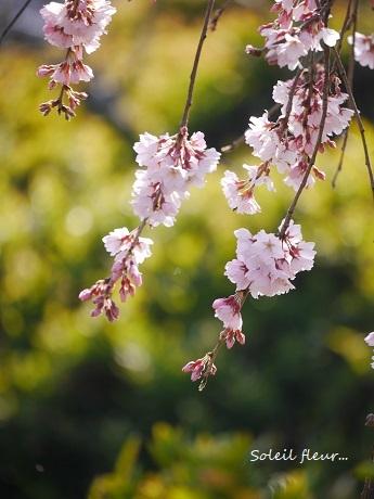 花は、咲く_c0098807_16433619.jpg