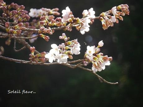 花は、咲く_c0098807_16434318.jpg