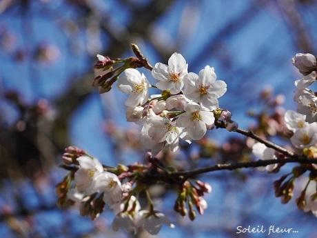 花は、咲く_c0098807_16434823.jpg