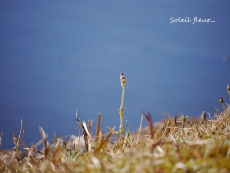 花は、咲く_c0098807_16465178.jpg