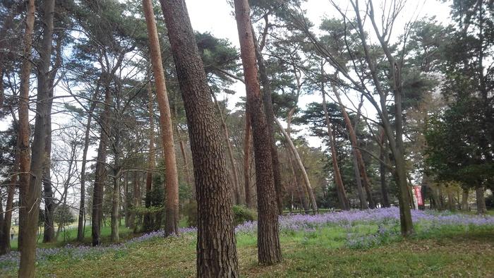 MFで探鳥から花見へ(桜は満開)_f0239515_1818519.jpg