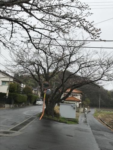 桜?_e0344925_08582521.jpg
