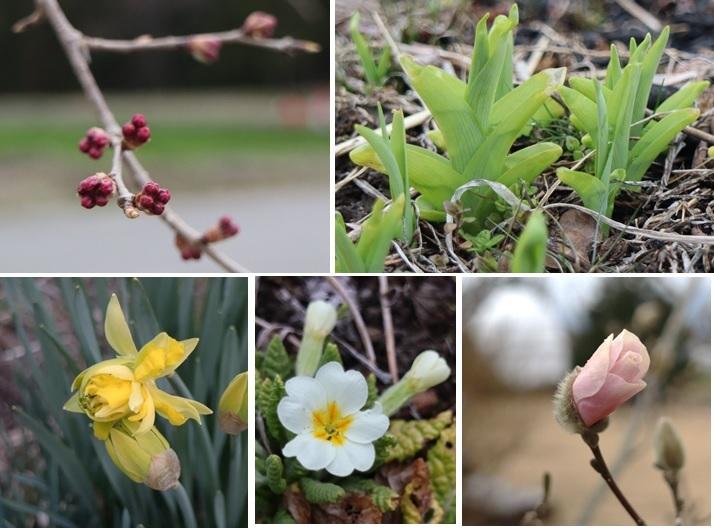 春の歩み_a0212730_19010267.jpg