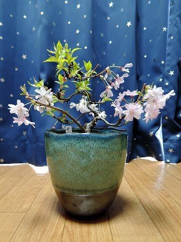 エアお花見_c0062832_16181214.jpg
