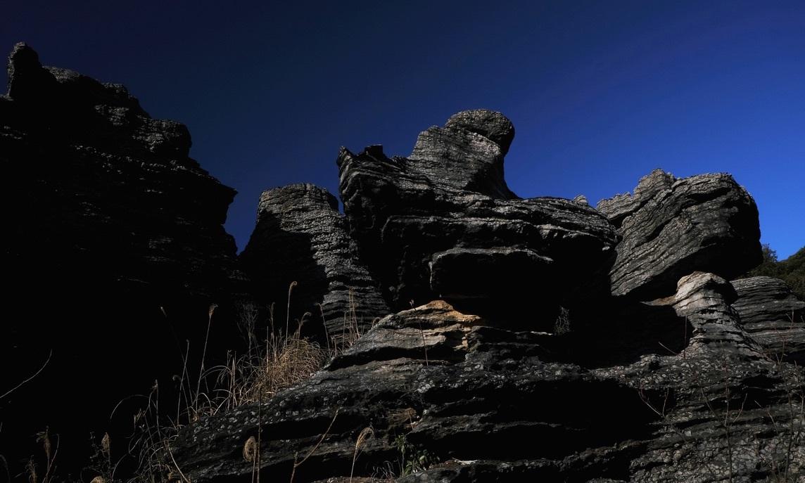 化石の森の春_f0315034_12295047.jpeg