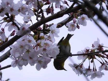 素晴らしい季節ですが…_a0123836_10560941.jpg