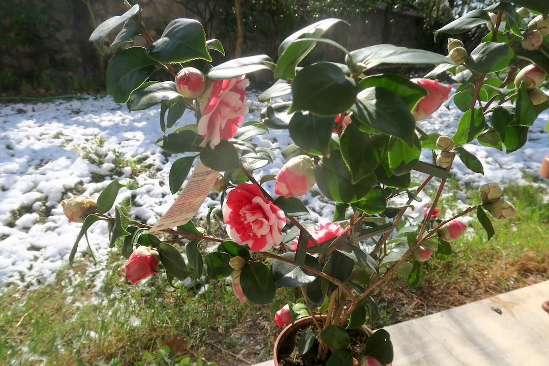春の蝶々の三色パスタ_f0234936_7212920.jpg