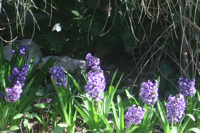 春の蝶々の三色パスタ_f0234936_791567.jpg