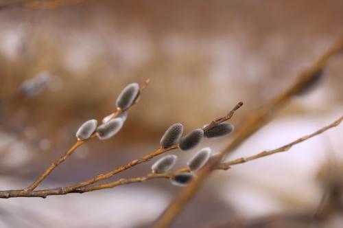 春はかならずやって来る 3月27日_f0113639_11380166.jpg