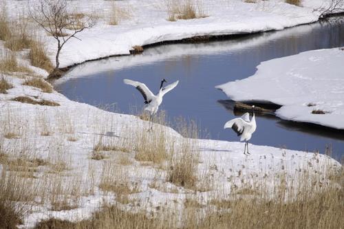 春はかならずやって来る 3月27日_f0113639_11380587.jpg