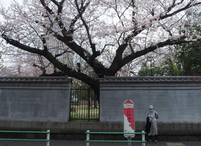 ご近所の桜【その1】 まだちょいと早かったぞなもし篇_d0027243_22353234.jpg