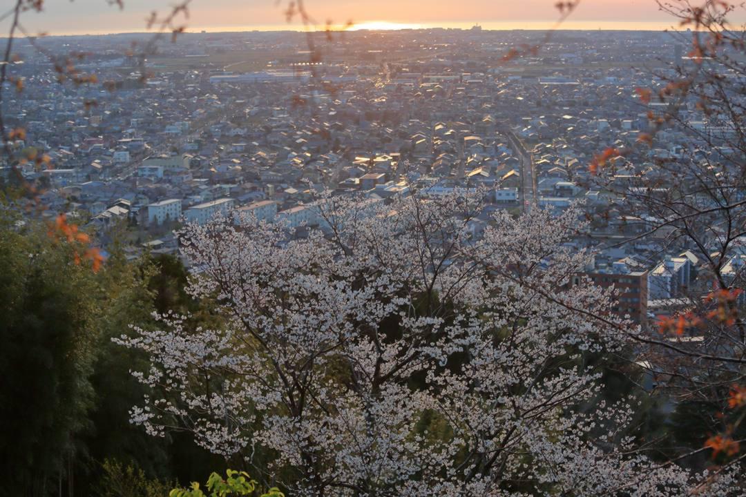 桜 2020_e0403850_21215668.jpg