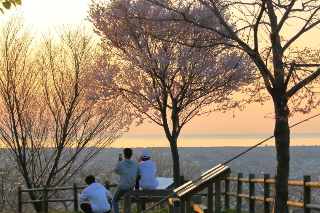 桜 2020_e0403850_21220093.jpg