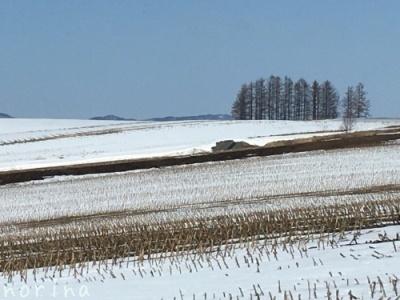 雪どけ進む美瑛散歩_e0326953_15011322.jpg