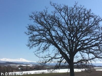 雪どけ進む美瑛散歩_e0326953_15024096.jpg