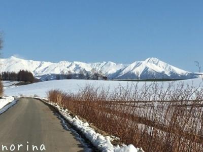 雪どけ進む美瑛散歩_e0326953_15141758.jpg
