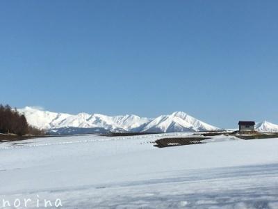 雪どけ進む美瑛散歩_e0326953_15144313.jpg